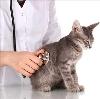Ветеринарные клиники в Горчухе